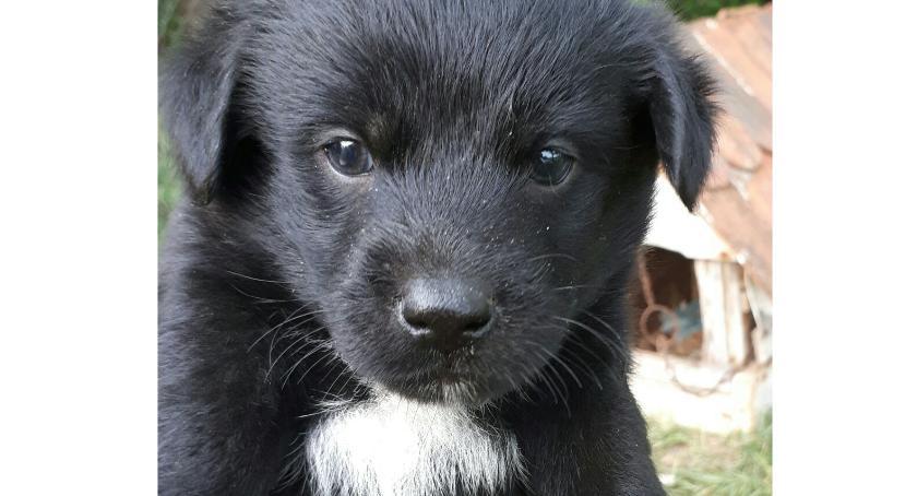 Zwierzaki, Piesek szuka nowego - zdjęcie, fotografia