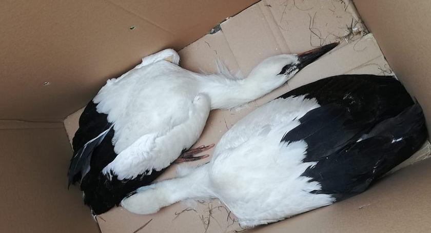 Zwierzaki, Pozostawione przez ptasich rodziców uratowane przez pracowników Obrytem - zdjęcie, fotografia
