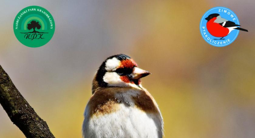 Zaproszenia, Zimowe ptakoliczenie ZAPROSZENIE - zdjęcie, fotografia
