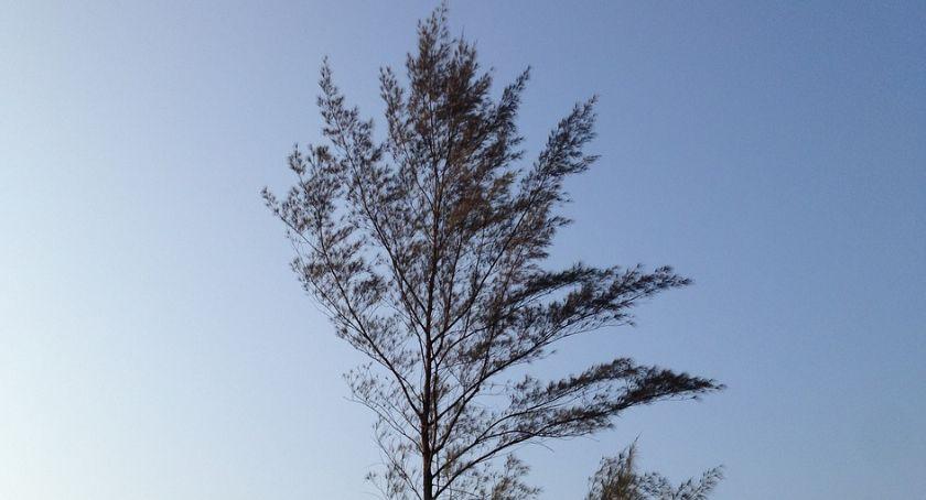 Komunikaty, Uwaga silny wiatr! - zdjęcie, fotografia