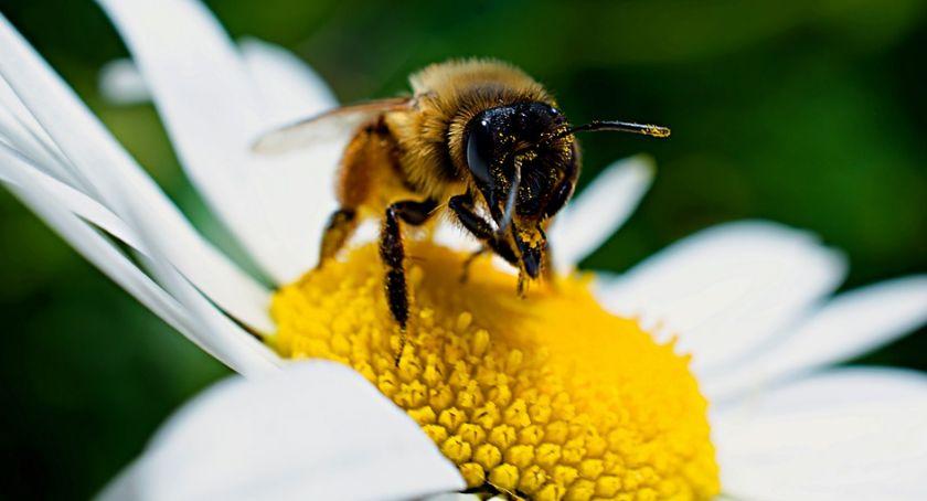 Komunikaty, Gminy przyłączają zasadzenia miliona kwiatów pszczół! - zdjęcie, fotografia