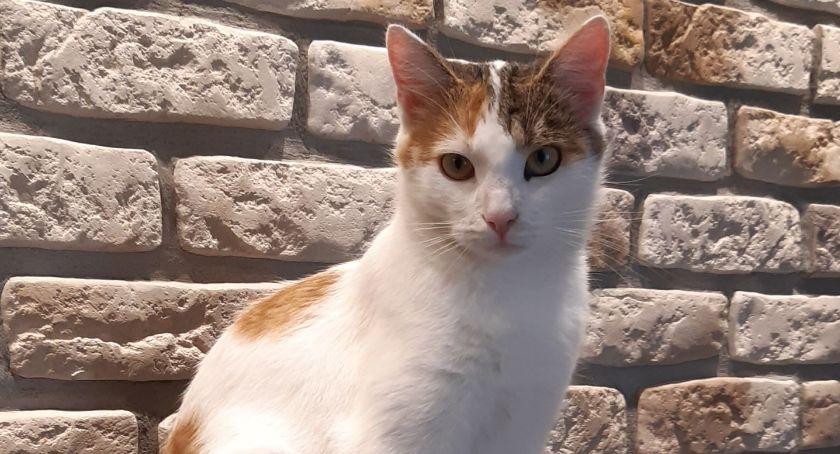 Komunikaty, Zaginęła redakcyjna kotka! - zdjęcie, fotografia