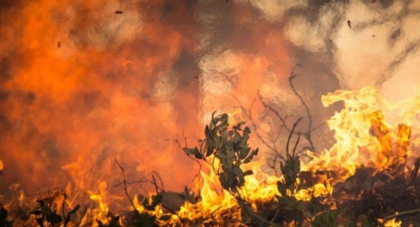 Straż Pożarna, Pożar budynku jednorodzinnego Głodowie - zdjęcie, fotografia