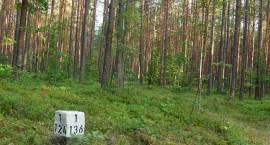 Zgubiłeś się w lesie? Nie szkodzi…