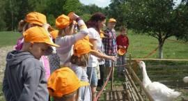 Słonecznikowa Brać w gospodarstwie Agro – Edukacyjnym