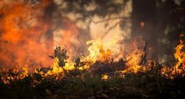 Pożar lasu w Gnojnie