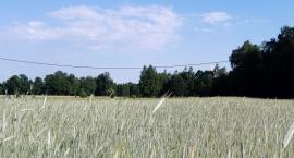 Susza w gminie Zatory – rolnicy mogą składać wnioski