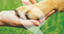 Ustawa o ochronie zwierząt – informator prawny dla praktyków