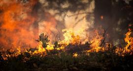 Płonie las w Klukowie