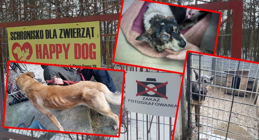 """Interwencje Powiat, """"Schronisko Sobolewie mordownia"""" Właściciel """"To pomówienie"""" - zdjęcie, fotografia"""