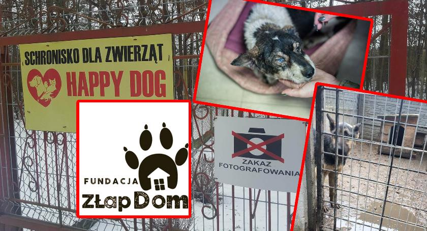"""Interwencje Powiat, Oświadczenie Fundacji Złap schroniska """"Happy Dog"""" - zdjęcie, fotografia"""