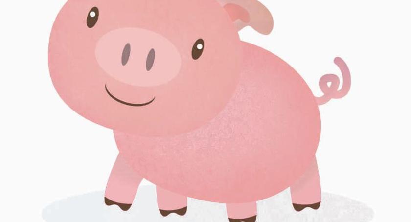 W Powiecie, Przygody świnek Miętnem teatr dzieci - zdjęcie, fotografia