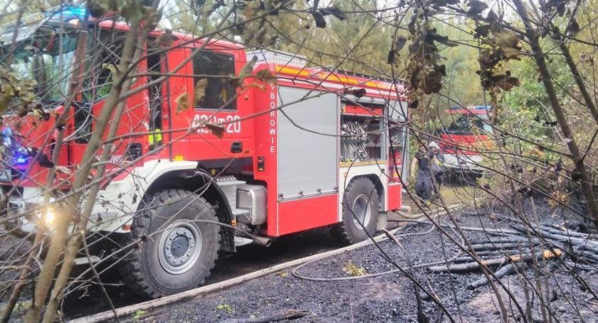 Pożary - interwencje straży, Pożar lesie Borowiu - zdjęcie, fotografia