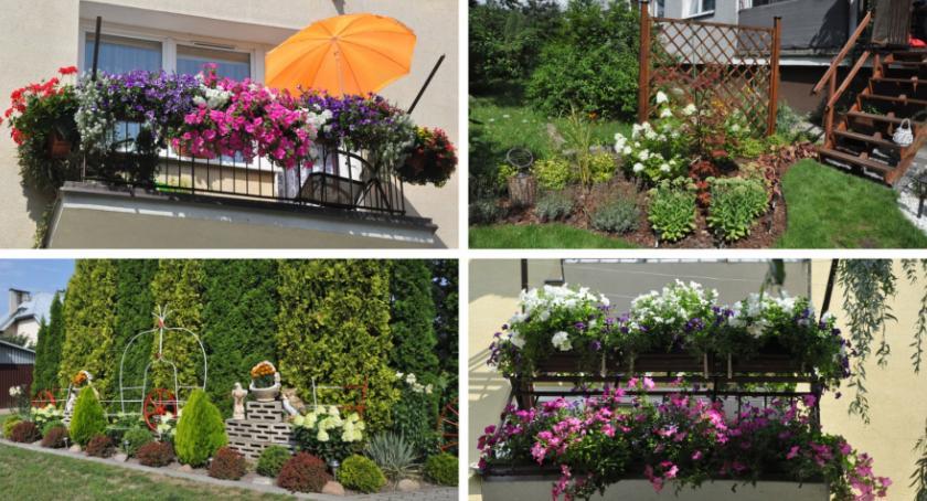 Inne Miejskie, Najpiękniejsze ogrody balkony wybrane! - zdjęcie, fotografia