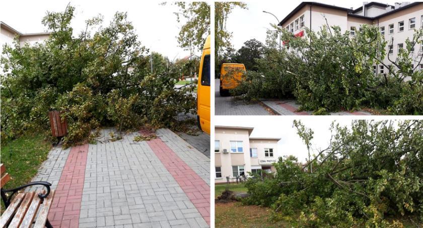 Inne Miejskie, szpitalu runęło drzewo - zdjęcie, fotografia