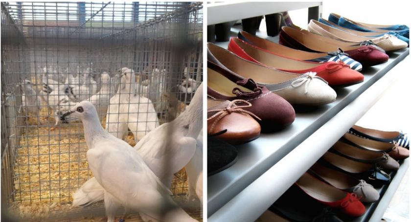 Sprawy kryminalne , Kradzież butów gołębi straty ponad - zdjęcie, fotografia