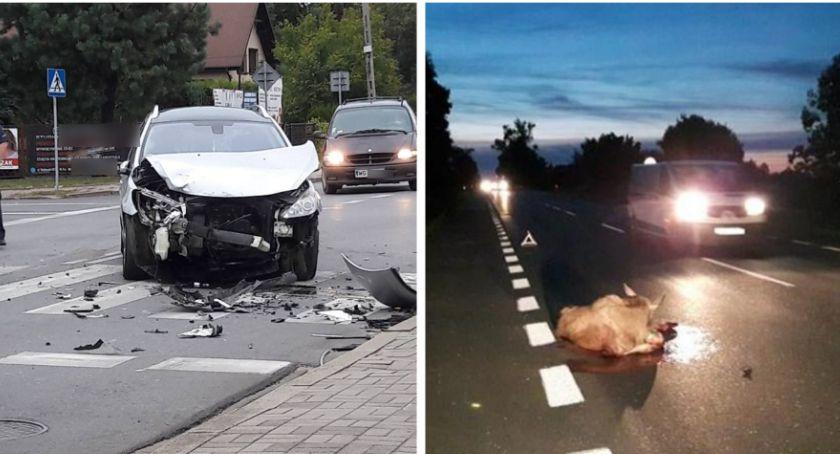 Wypadki drogowe , osoby szpitalu martwa sarna - zdjęcie, fotografia