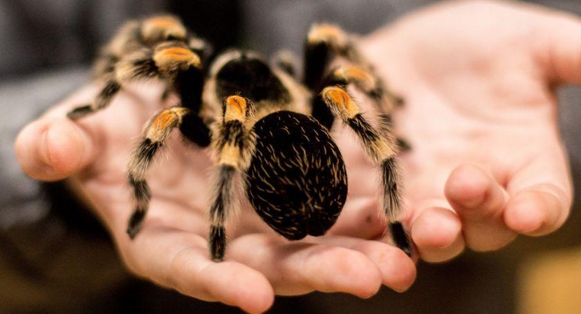 W Garwolinie, Wystawa żywych pająków skorpionów Garwolinie Konkurs - zdjęcie, fotografia
