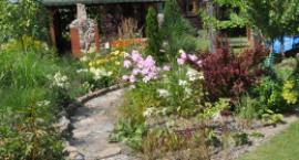 Mają najpiękniejsze ogrody i kompozycje zieleni w Garwolinie