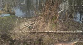 Gm. Garwolin: Śnięte ryby w Wildze! Nie wchodźcie do wody!