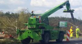 Wycinka drzew i prace na budowie S17 (zdjęcia i video)