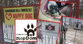 """Oświadczenie Fundacji Złap Dom ws. schroniska """"Happy Dog"""""""