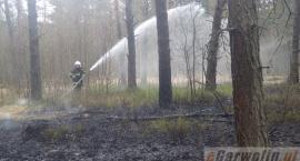 Ktoś umyślnie podpalił las w Gończycach?