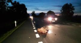 Ponad 20 zdarzeń drogowych z dzikimi zwierzętami!
