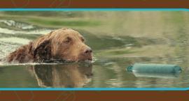 Międzynarodowe zawody psów aportujących już w weekend