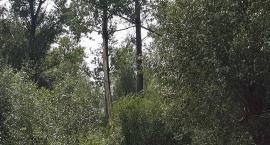 Pilawa: Piorun trafił w 3 drzewa obok naszego domu!
