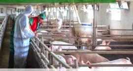 Spotkanie informacyjno-szkoleniowe dla producentów trzody chlewnej