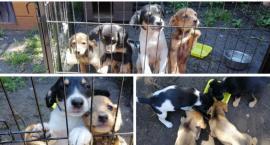 Fundacja zaopiekowała się szczeniakami – Urząd nie pokryje kosztów