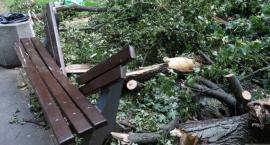 Śmierć niemowlęcia przygniecionego konarem drzewa – Urzędnicy usłyszeli zarzuty