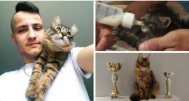 Kot z Instagramem i pucharami – Dachowiec znaleziony na budowie wygrywa wystawy