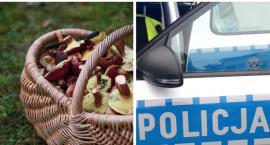 Zaginiony grzybiarz odnaleziony – Jak nie zgubić się w lesie? Apel policji