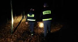 Spędził noc w lesie – Zaginiony grzybiarz odnaleziony