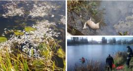 Śnięte ryby w stawie, martwa sarna w rzece – Ktoś zanieczyścił wodę?
