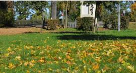 Nie będą grabić liści w mieście – Apel do mieszkańców