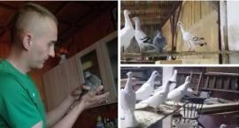 20 lat pracy na marne – Kradzież i wysoka nagroda za wskazanie miejsca pobytu gołębi! Video
