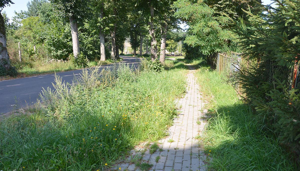 Interwencje, Zarośnięty chodnik niespodziankami - zdjęcie, fotografia