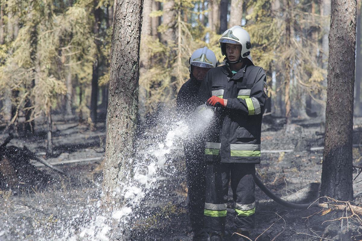 Pali się, Palił Lipuszku [GALERIA] - zdjęcie, fotografia