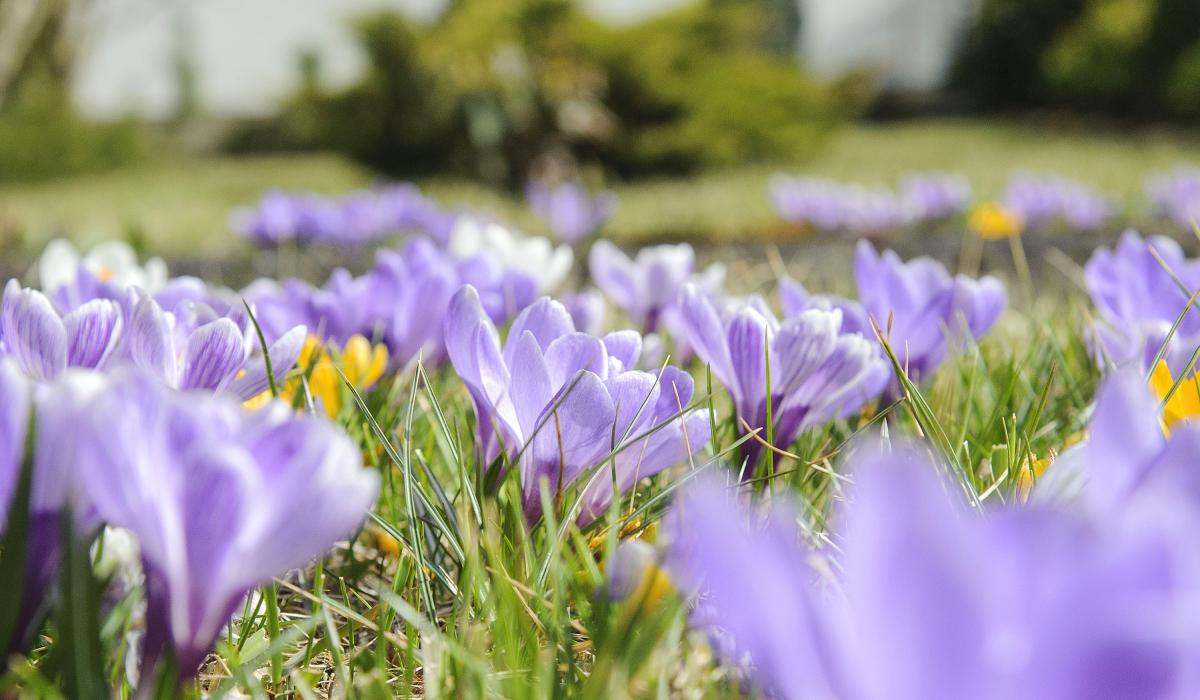 Przyroda, Rabatki kwiatki - zdjęcie, fotografia