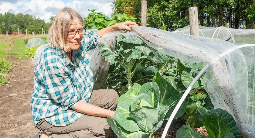Ludzie, Ekologiczne warzywa Baranowa - zdjęcie, fotografia