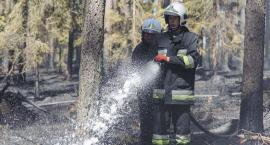 Palił się las w Lipuszku [GALERIA]
