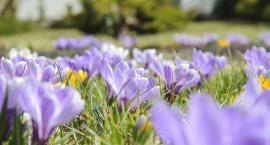 Rabatki i inne kwiatki