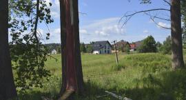 Strzaskane drzewa