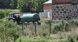 Hodowla zatruwa wieś, czyli wojna o świnie?