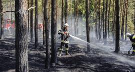 Palił się las w Przewozie
