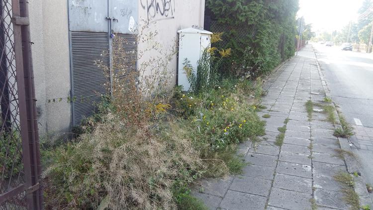 Społeczeństwo, Zadbajmy ulice Cegielni - zdjęcie, fotografia
