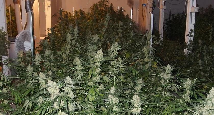 Sprawy kryminalne , Areszty plantatorów - zdjęcie, fotografia